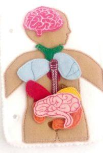 juguete de fieltro organos cuerpo humano